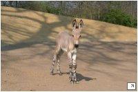 © 2008 Zoo Hannover GmbH